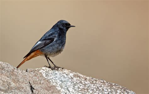 Freda Lightfoot: Birds in our Spanish garden