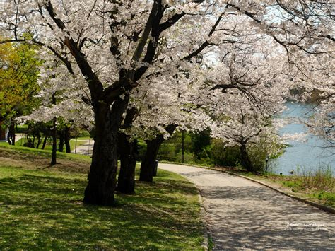 Free Beautiful And Lovely Spring Season Wallpaper For ...