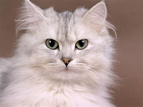 Free Cat Wallpaper, Cute Cat Pictures, Animal Desktop ...