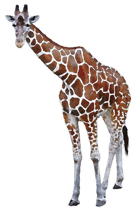 Free illustration: Giraffe, Africa, Watercolor, Animal ...