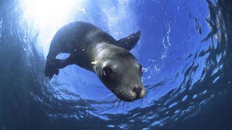Free Image Bank: Viaje por el fondo del mar III  Animales ...