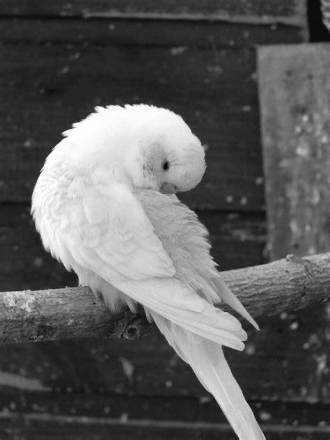 Free Images : wing, black and white, beak, toilet, blue ...