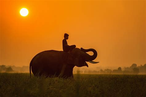 Free photo: Africa, Africans, Animals, Asia   Free Image ...
