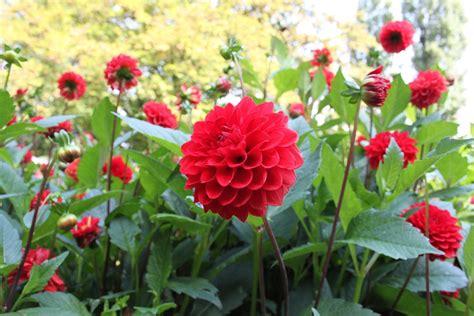 Free photo: Flower, Park, Nature, Flowers   Free Image on ...