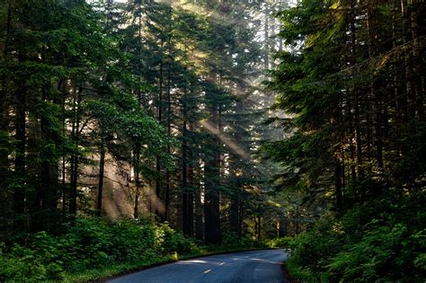 Free photo: Forest, Trees, Woods, Sunlight - Free Image on ...