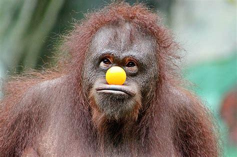 Free photo: Monkey, Funny, Fun, Face, Cool, Zoo - Free ...