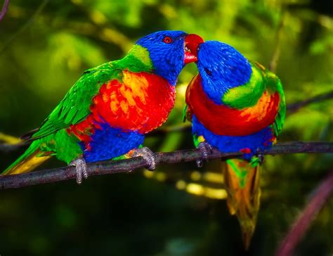 Free photo: Parrots, Pair, Bird, Colors   Free Image on ...