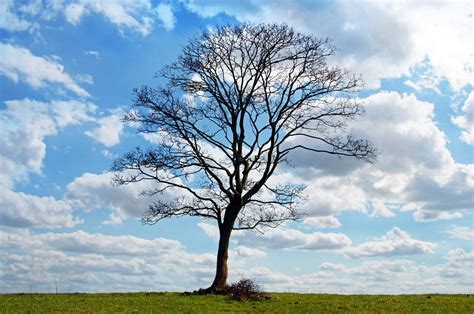 Free photo: Tree, Blue, Sky, Branch, Branches - Free Image ...
