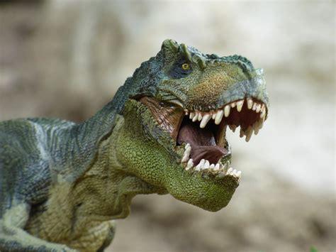 Free photo: Tyrannosaurus, Dinosaur, Prehistory - Free ...