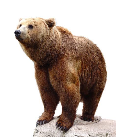 Free photo: Wild, Brown, Bear, Nature, Animal   Free Image ...