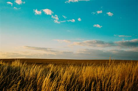 Free stock photo of agriculture, countryside, field