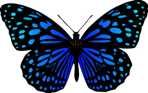 Free vector graphic: Animal, Butterflies, Butterfly   Free ...