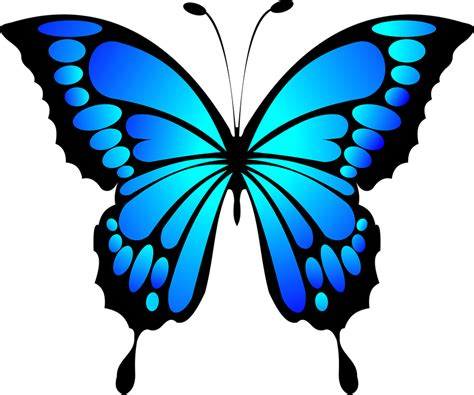 Free vector graphic: Butterfly, Blue, Insect, Summer ...