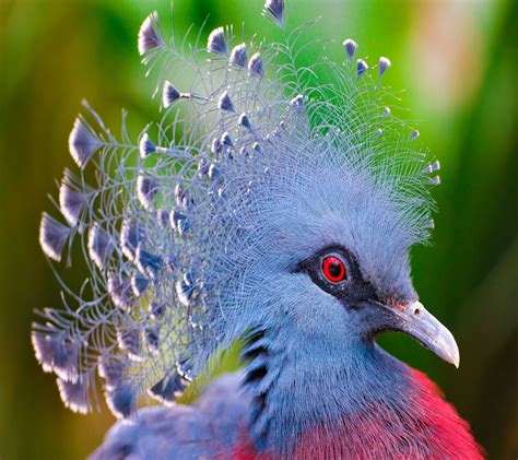 Free Wallpaper Birds - WallpaperSafari