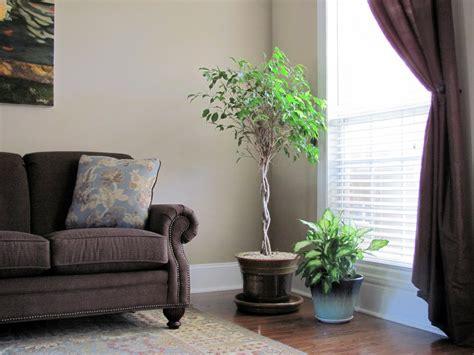 Fresh Indoor Plants Decoration Ideas For Interior Home ...