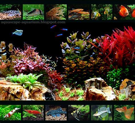 freshwater aquarium fish types   aquarium: Freshwater ...