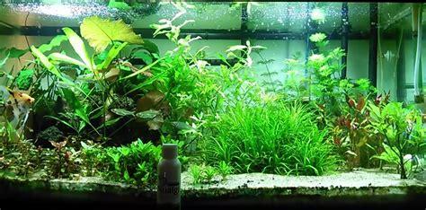 Freshwater Aquarium Substrate - 1000+ Aquarium Ideas