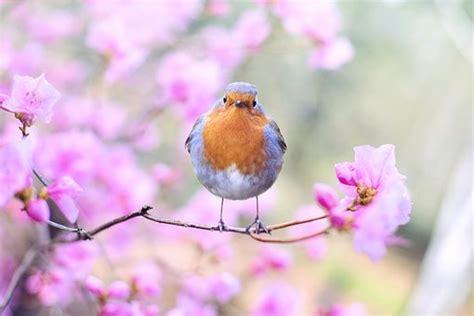 Frühling Bilder · Pixabay · Kostenlose Bilder herunterladen
