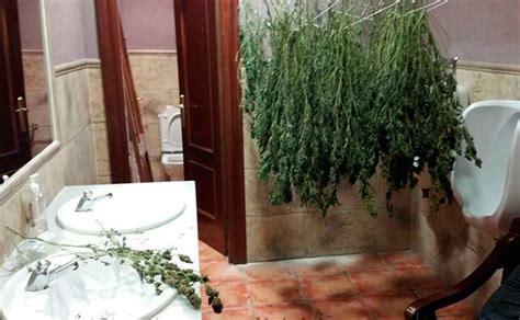 Frustran la instalación de un invernadero de marihuana en ...