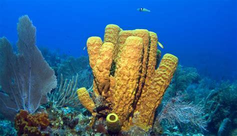 ¿Fueron las esponjas de mar los primeros animales de la ...