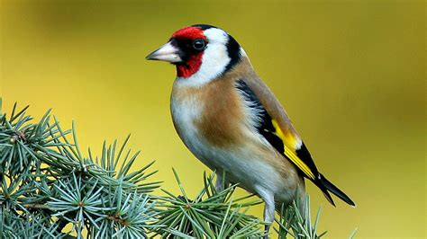 Full HD Birds Wallpapers For PC - Get For Free - Get For ...