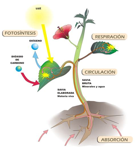 Función de nutrición autótrofo   BIOSFERA   Pinterest