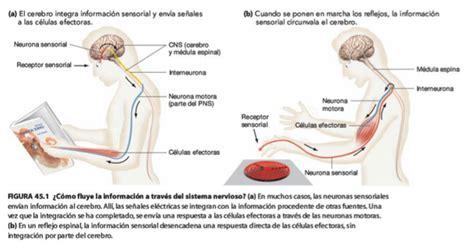 Función de relación Sistema nervioso Fisiología