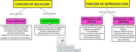 FUNCION DE RELACIÓN Y REPRODUCCIÓN