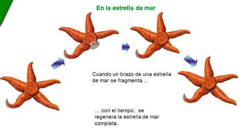 FUNCION DE RELACIÓN Y REPRODUCCIÓN on emaze