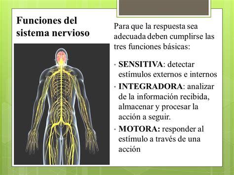 funcion del sistema nervioso unidad 1 sistema nervioso ...