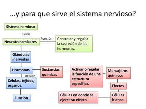 Funcionamiento del sistema endocrino
