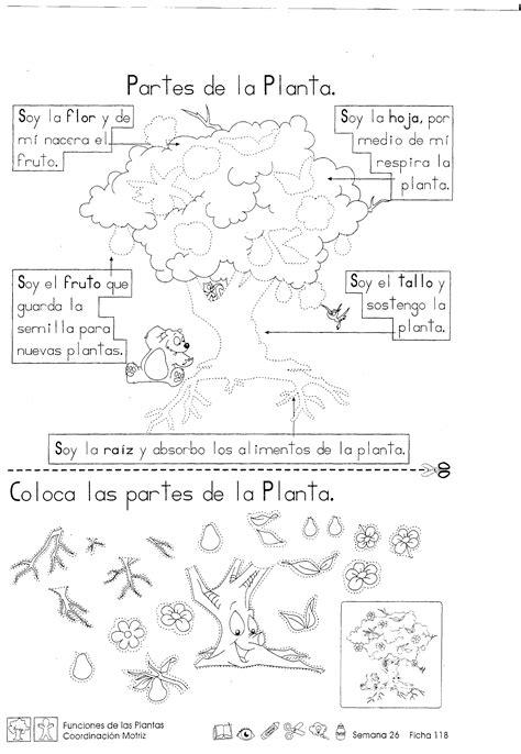 Funciones de las plantas: 2do grado - Material de Aprendizaje