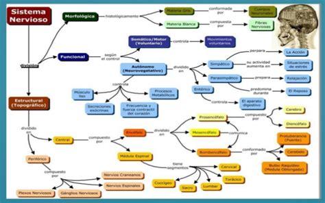 Funciones de Sistema Nervioso || Psicología