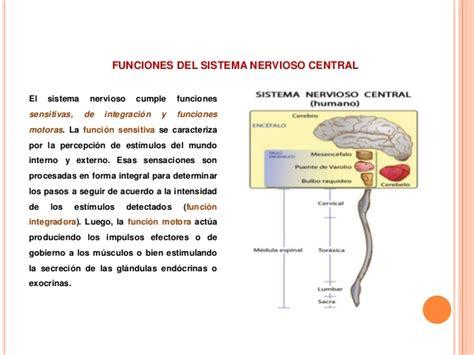 Funciones del sistema nervioso