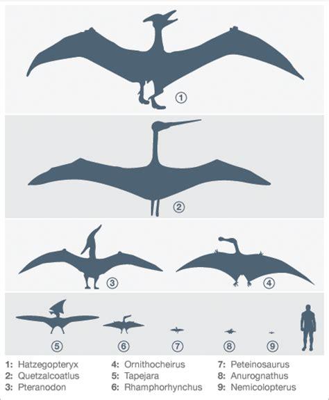 Fundacion Dinosaurios Cyl: Descubierto el mayor ...