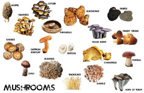 Fungi as Food for Gatherers – egl364sbu