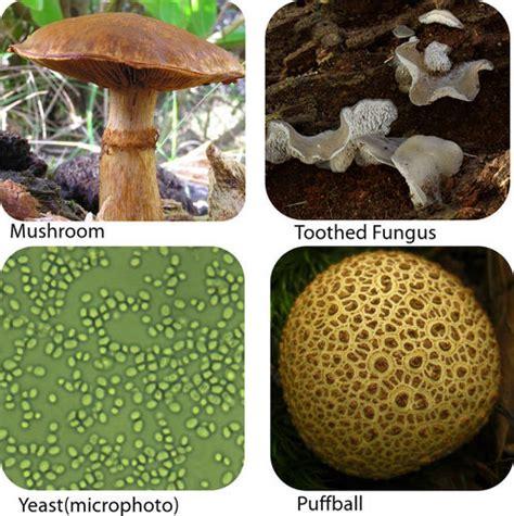 Fungi | CK 12 Foundation