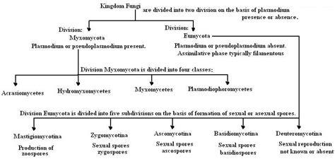 Fungi Classification Chart | www.pixshark.com   Images ...