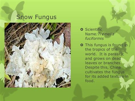 Fungi examples