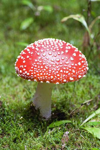 Fungi Including Lichens (Kingdom Fungi) · iNaturalist.org