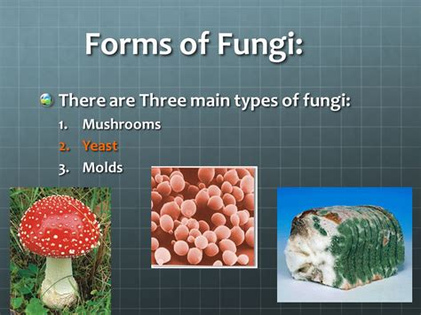 Fungi.   ppt video online download