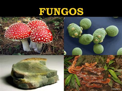 Fungos   Biologia: A ciência da vida