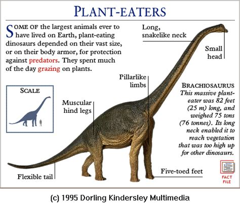 Funny Animal: Dinosaurs pictures and names