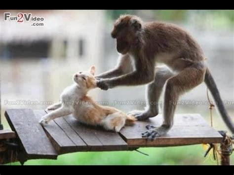 Funny animals 2016 - funny animals being stupid - funny ...