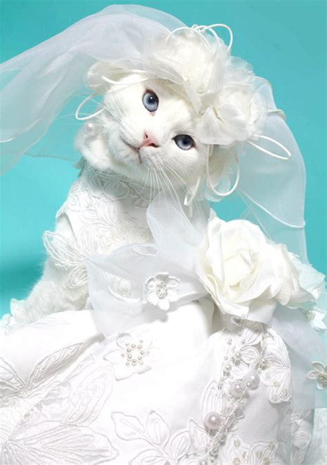 Funny Cat Wedding Dress