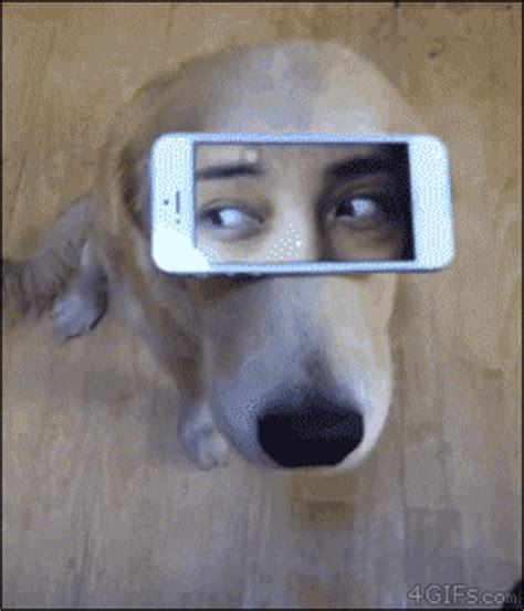 Funny gifs | Dog 3.0Best Gifs | Best Gifs