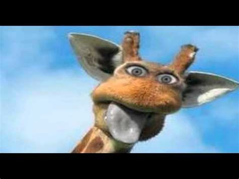 Funny Giraffe Compliation - YouTube