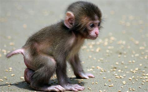 Funny Monkey | A Cute and Naughty Baby Monkey - YouTube