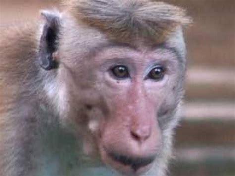 Funny Monkey For kids - YouTube