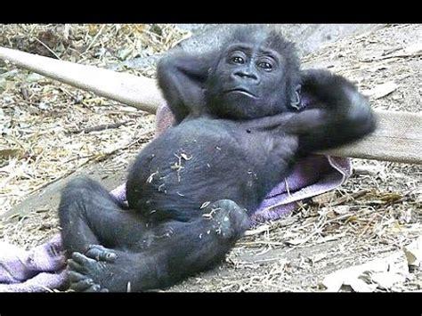 Funny Monkey Videos - A Funny Monkeys Compilation 2015 ...